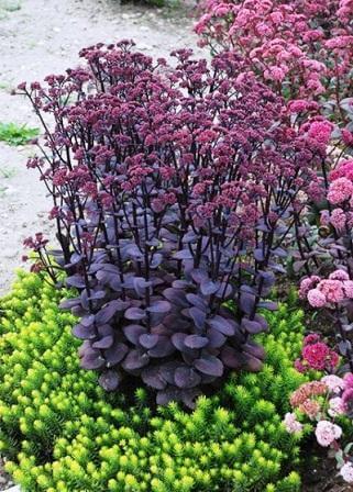 кустарниковые растения